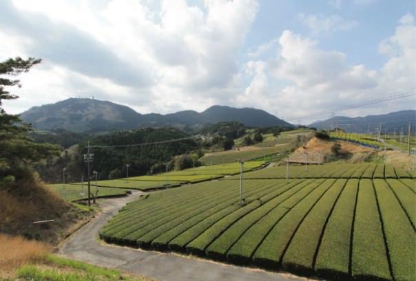 静岡茶草場