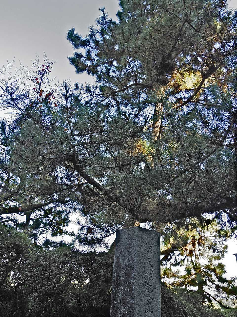 東京都天然記念物