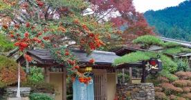 雰囲気が素敵すぎる「茶房むべ」でまったりティータイムはいかが? #tokyo島旅山旅